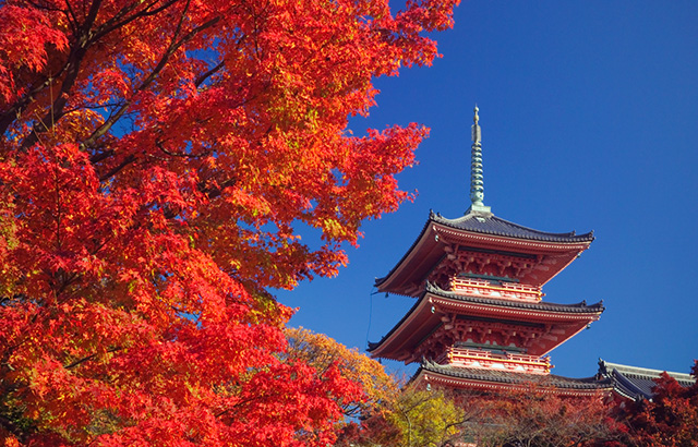 Japan Tour Package Specials