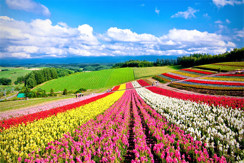 News Witness Japan Beautiful Summer Scenery Official Tourism